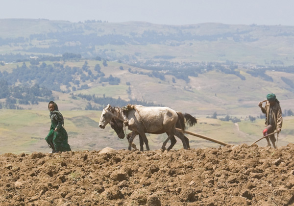 TDS Voyage - Simien Ethiopie