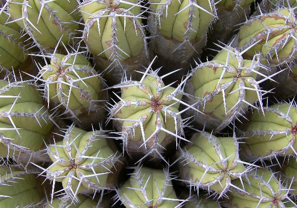 TDS Voyage - Tourisme équitable et solidaire - Maroc - Dunes de Rasmouka - Cactus