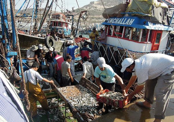 TDS Voyage - Tourisme équitable et solidaire - Maroc - Agadir - Port - Sardines