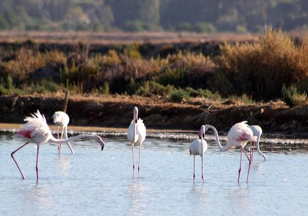 TDS Voyage - Tourisme équitable et solidaire - Portugal - Parc National de la Vallée du Guadiana - Flamants roses