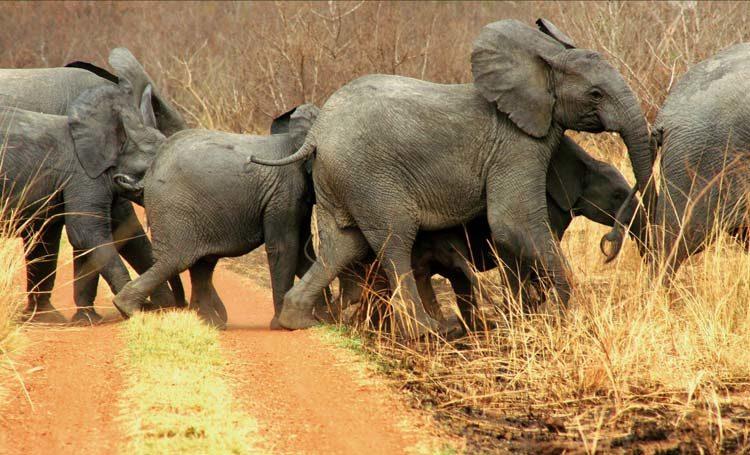 TDS Voyage - Elephants au Bénin