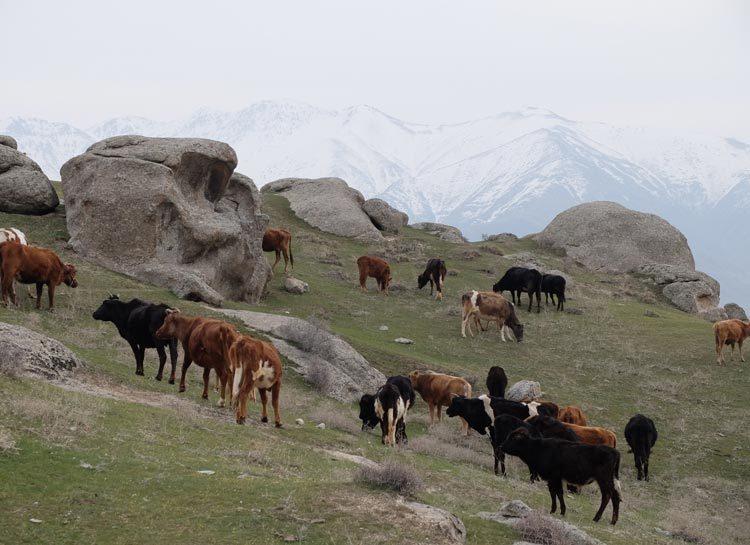 TDS Voyage solidaire ouzbekistan village Ayaktchi