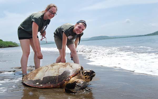 Tortue de mer au Nicaragua