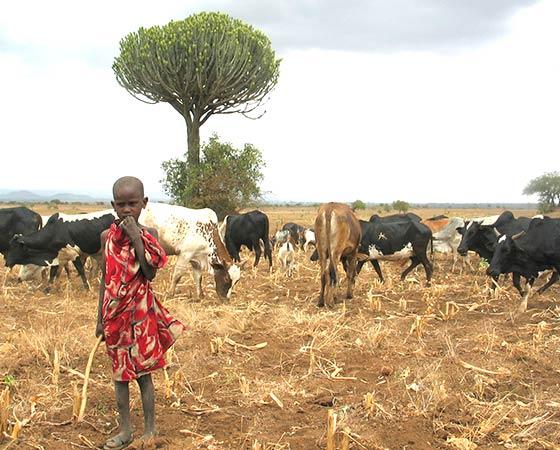 Jeune berger Massaï en Tanzanie
