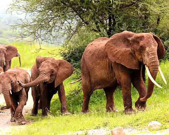 sites de rencontres libres Tanzanie