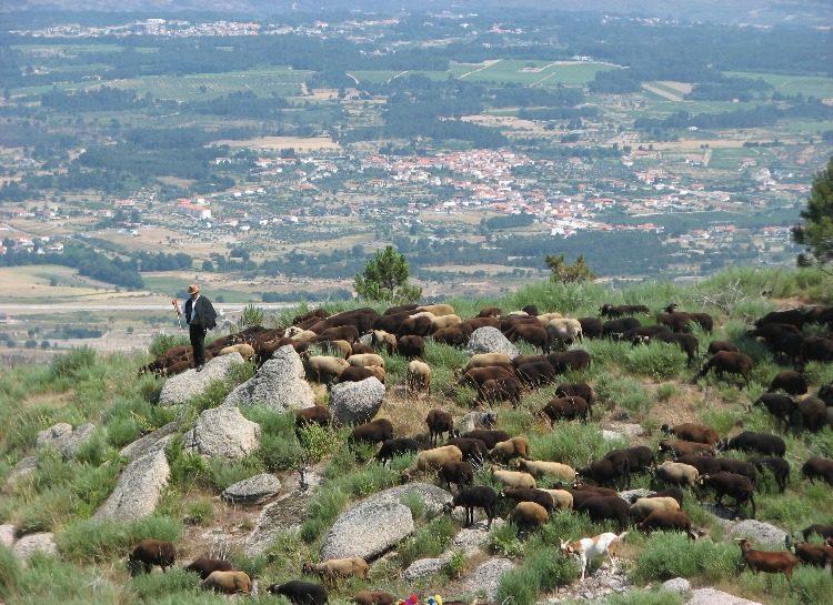 Serra da Estrela - TDS Voyage